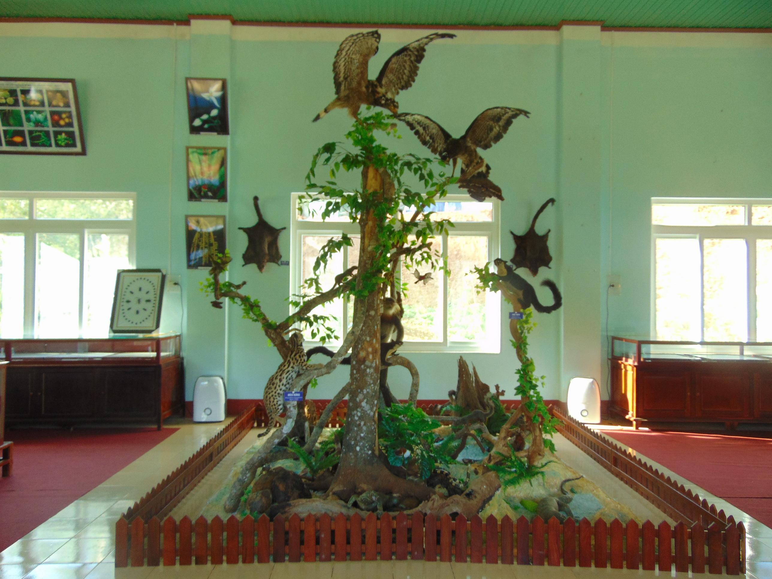 Phòng tiêu bản động thực vật