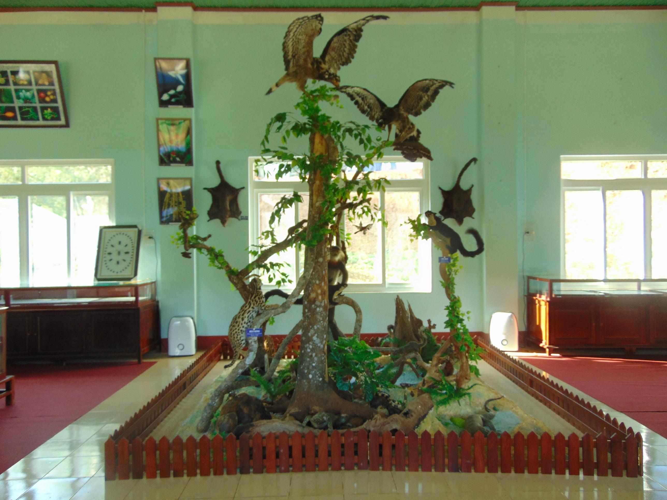 Bảo tàng mẫu động thực vật lên sóng